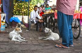 Delhi dog count rolls on: Paharganj, a mixed bag