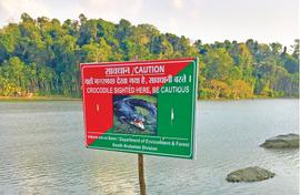 Crocs do their own number in the Andamans