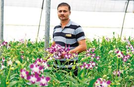 Orchid village: B'lore gets its supply from remote Cotigao
