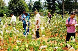 A wealth of rare seeds for farmers in Thrissur