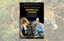 Fighting for tigers: Their rise and fall in Panna